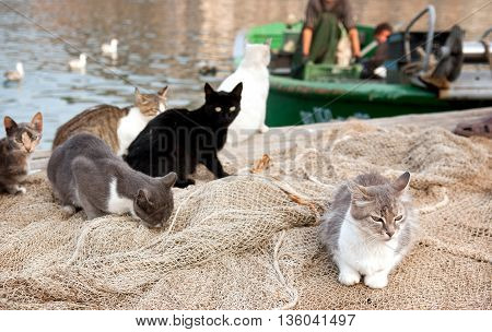 Street cats waiting for fishermen on pier.