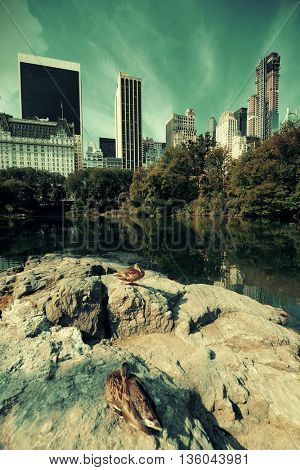 Central Park Spring with dusks in midtown Manhattan New York City
