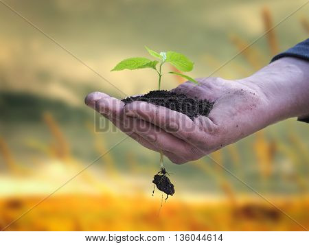 Man's hand holding a young plant and a handful of fresh earth on yellow-green background. The concept of drought environment landscaping and ecology the future