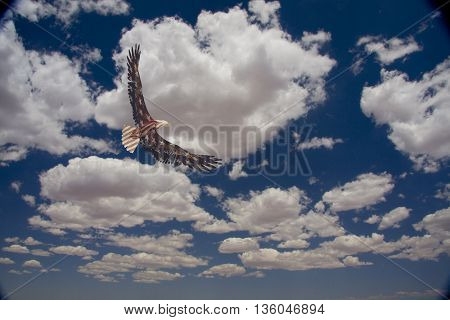 American Flag Eagle in the sky 3D Render