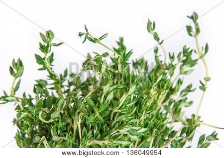 kitchen herb thyme isolated on a white background