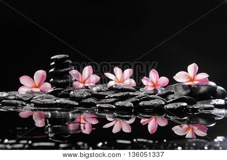 spa concept-frangipani and wet stones