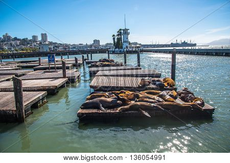 Sea Lions at Pier 39 San Francisco California
