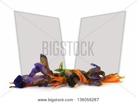 geranium petunia dry delicate flowers leaves and petals of pressed iris rose marigolds Aquilegia pelargonium isolated on white background scrapbook photo frame