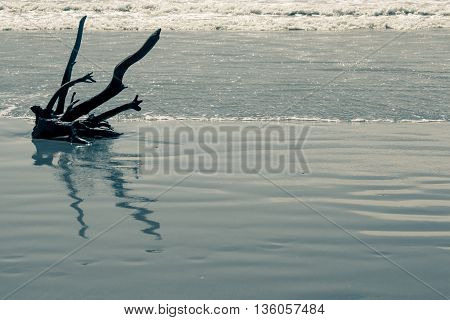 Drift Wood On The Beach In Northern Italy