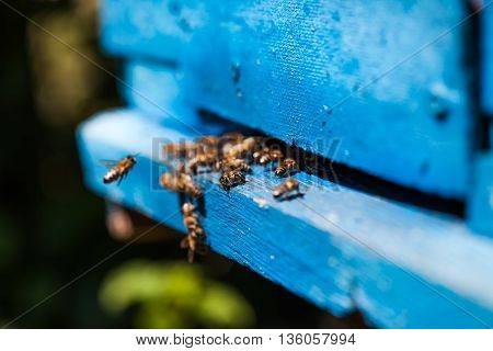 Bees fly to the hive, macro, bees, some