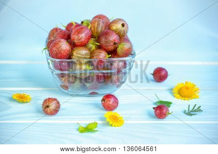 Ripe juicy red gooseberry in glass bowl, yellow chamomiles and green leaves on painted blue wooden background