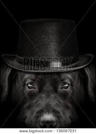 dark muzzle labrador dog n a hat closeup. front view