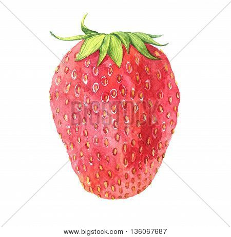 watercolor drawing strawberry, appetite red berry with green leaves isolated at white background, hand drawn illustration