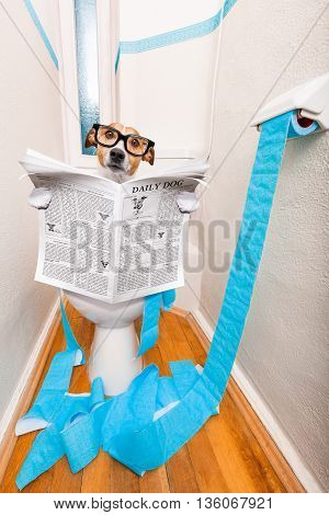 Dog On Toilet Seat And Newspaper
