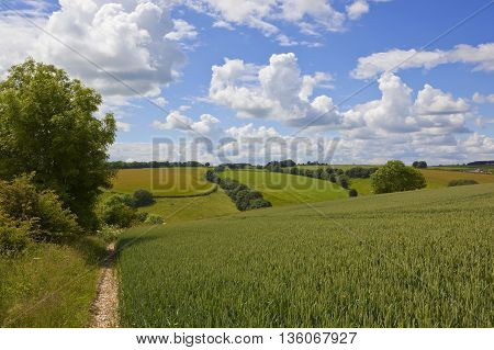 an agricultural landscape in the yorkshire wolds england with a wheat field and hedgerows under a blue cloudy sky