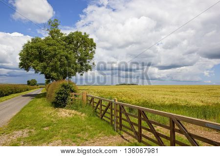a new fence and gate near a hawthorn hedgerow and small country road under a blue cloudy sky in the yorkshire wolds