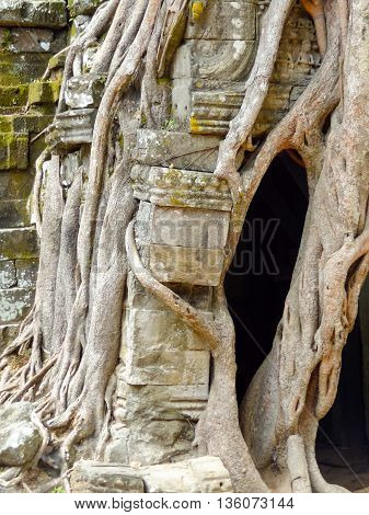 detail of the Ta Prohm temple at Angkor in Cambodia