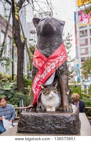 Tokyo Japan - November 21 2015: Unidentified people at Bronze statue of Hachiko at Shibuya Station. A dog is remembered for his remarkable loyalty to his owner which continued for many years Tokyo Japan.
