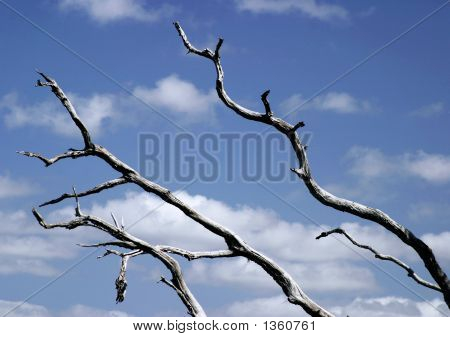 Dead Wood Sky