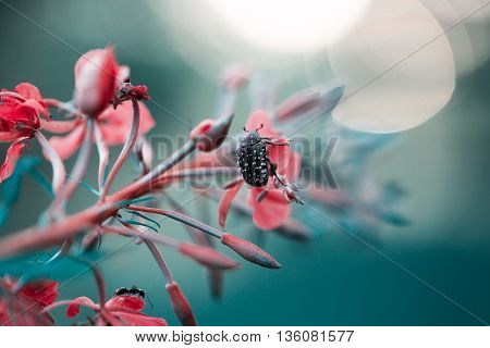 Pink blue flower and beetle in white dot on it