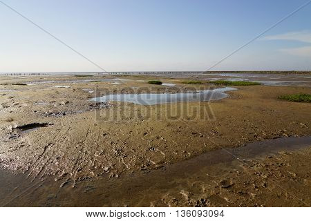 North Sea at low tide in summer