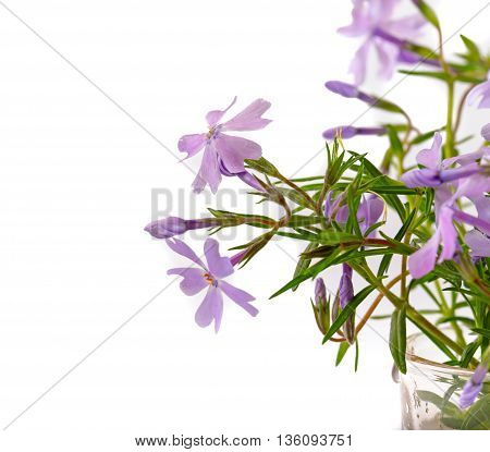 Small lilac flowers on a light white background. Close up small depth of sharpness copyspace left