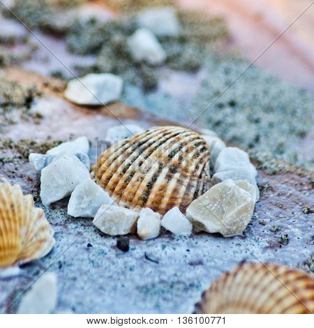 sea shells used as a decoration or as a shaper for sand or as a game for children