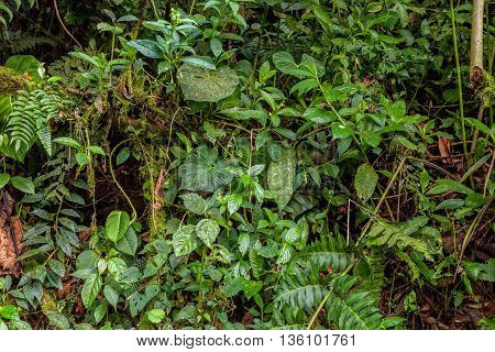 Tropical Rainforest Amazonian Jungle National Park Yasuni South America