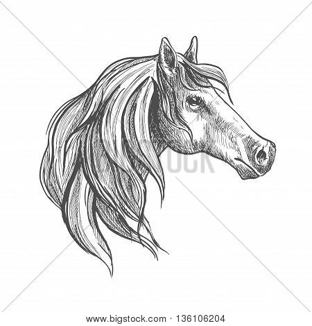 Powerful american quarter stallion with refined profile and long muzzle. Sketch of posing show hunter horse for equestrian sport symbol or t-shirt print design usage