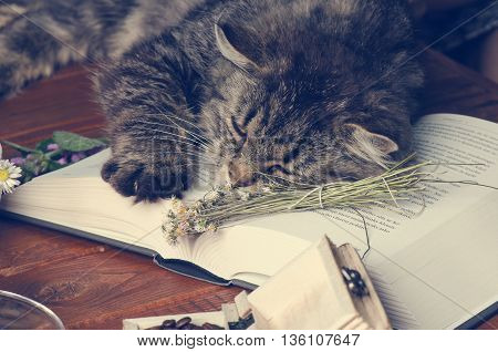Cat lying on a book and sleep. Animals. Funny pets. Literature