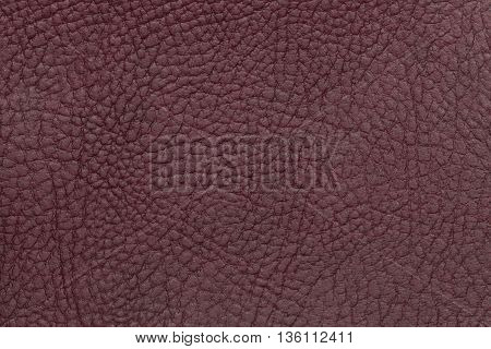 Dark burgundy leather texture background. Closeup photo. Reptile skin. The skin of a crocodile or a snake
