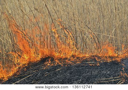 A close up of the flame on brushfire.