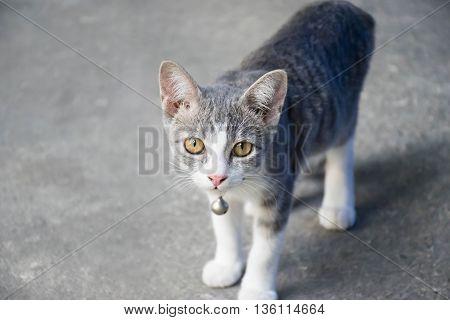 beautiful a cute cat and looking askance