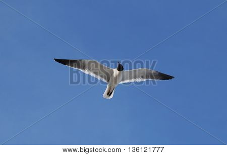 A Seagull gliding in the wind over the beach.