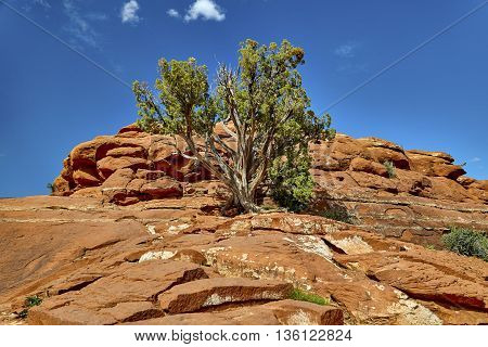 Tree Growing Out Of A Red Rock Formation