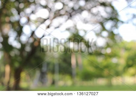 Blur Park With Bokeh Light Background, Nature, Garden, Spring And Summer Season