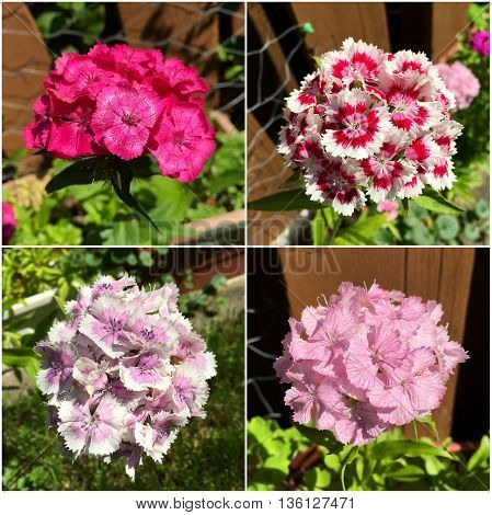 Collage of summer flowers pink and white