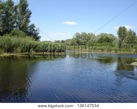 Blue sky blue water green reeds .