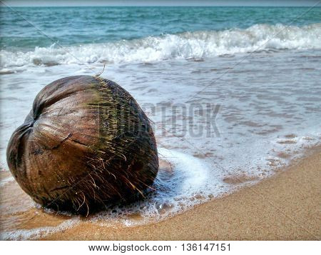 Brown coconut is laying at the seashore. Slight waves of the water surrounding the fruit which also lays in the sand each time the tide is low.