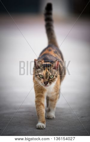 adorable street cat with great expression on her face