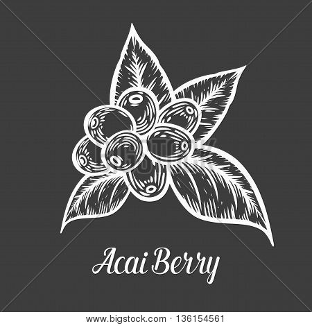 Acai Berry, Fruit, Leaf, Plant Branch. Superfood Organic Asian Berry. Hand Drawn Vector Sketch Engra