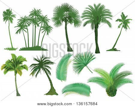 Palm Trees, tropical tree, green, natural, botanical, jungle, plant,