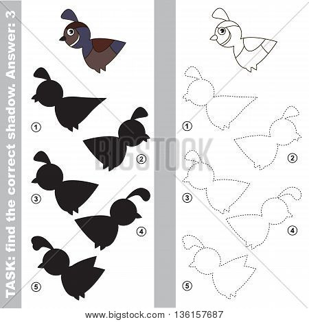 Quail with different shadows to find the correct one. Compare and connect object with it true shadow. Easy educational kid gaming. Simple level of difficulty. Visual game for children.