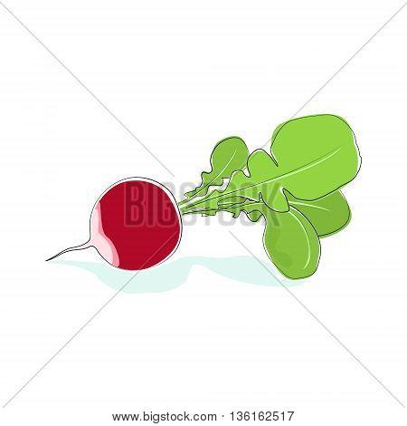 Radish, Vegetable Radish with Tops Isolated on White Background, Vector Illustration
