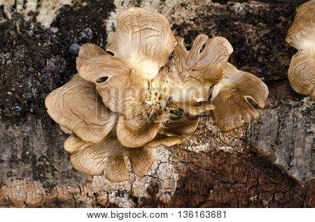 The Fungus Grows On A Tree, A Tree And A Mushroom