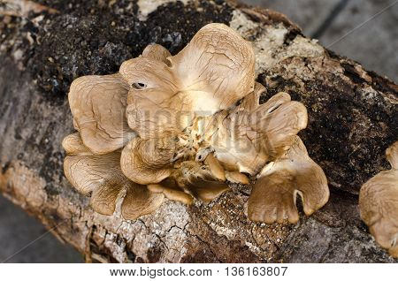 The Fungus Grows On A Tree, A Tree And A Mushroom