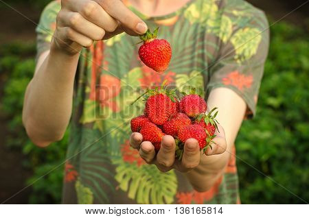 Summer Berries Topic: Man Holding Hands With Ripe Red Garden Strawberry On A Green Background