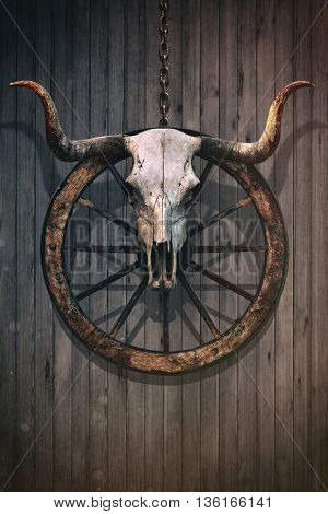 Long horned bull skull and old west wagon wheel hanged on a wooden wall