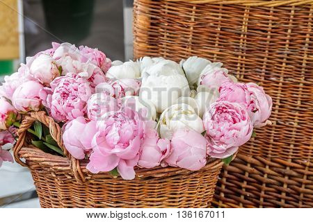 Closeup of pink peony flowers in basket