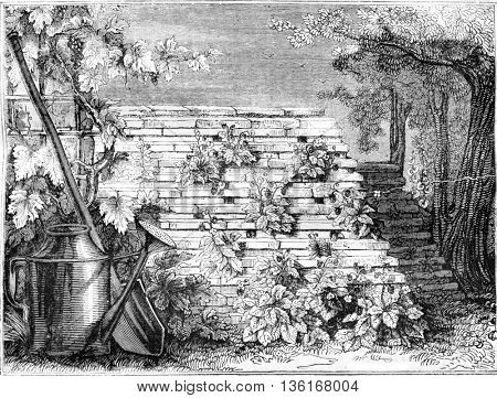 New way to grow strawberries, vintage engraved illustration. Magasin Pittoresque 1836.