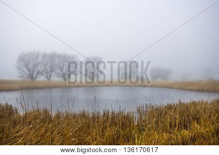 autumn morning at a forest lake with fog and beautiful warm colors