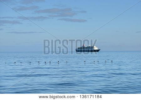 Flock of the Cape cormorants or Cape shag (Phalacrocorax capensis) in Luderitz bay and luxury cruise ship on background at sunrise. Travel concept