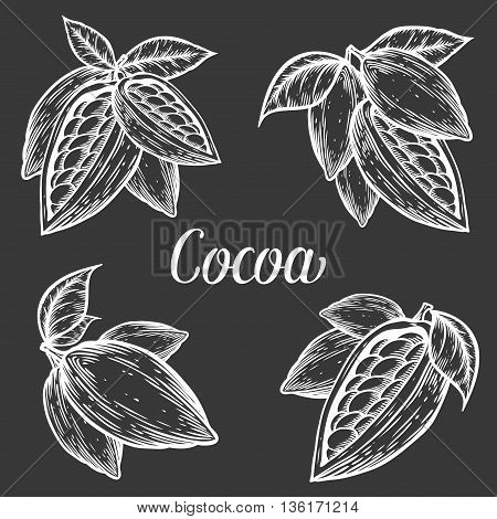 Cacao Hand Drawn Cocoa Botany Vector Illustration Set. Blackboard Doodle Of Healthy Nutrient Food. C