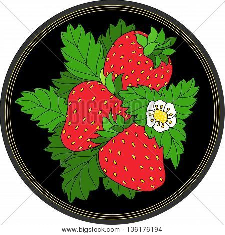 Three ripe strawberry, green leaves and white flower on round black background. Vector illustration.